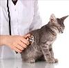 Ветеринарные клиники в Будогощи